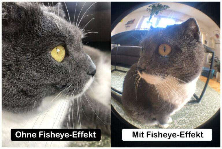Foto von Katze mit Fisheye-Effekt